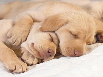 perritos_durmiendo1.jpg