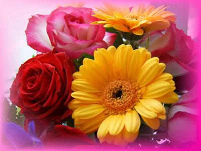tipos de flores. Diferentes tipos de Flores