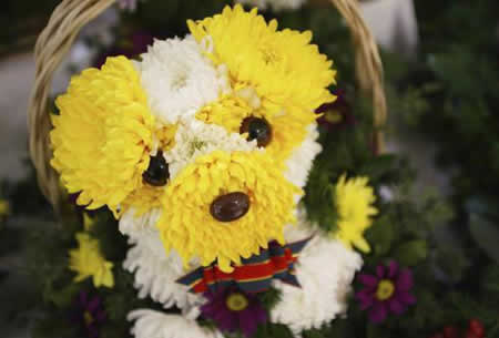 perro-flores
