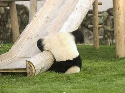 caida-panda