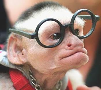 mono-anciano