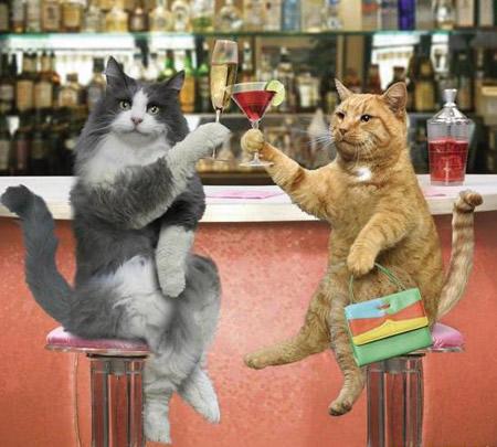 Gatos borrachos  Imgenes curiosas
