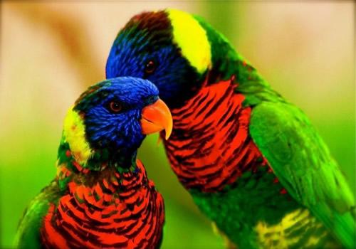 Aves hermosas