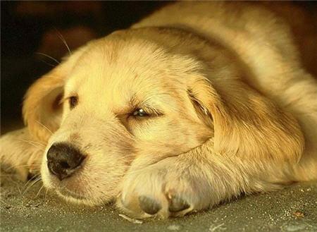 Oración de un perro