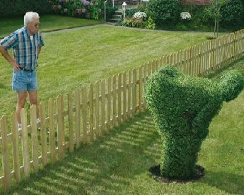 Hombre de árbol