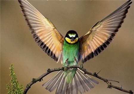 Ave estirando alas