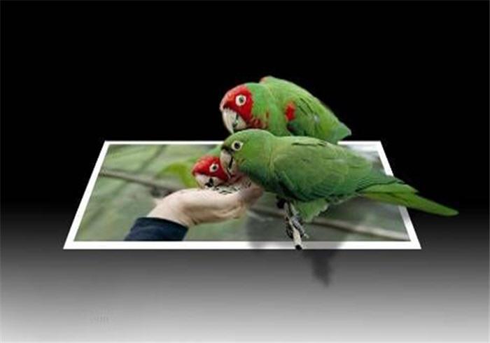 Montaje de pájaros